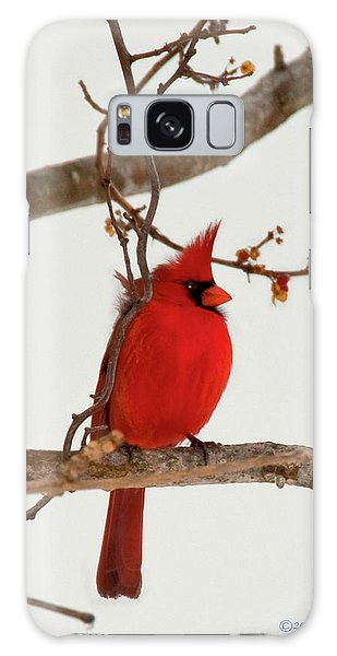 Righteous Cardinal Galaxy Case