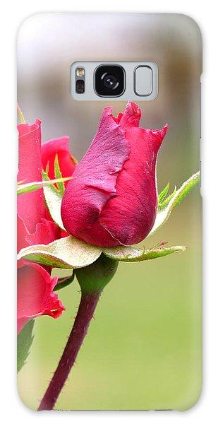 rosa 'Proud Mary' 2964 Galaxy Case