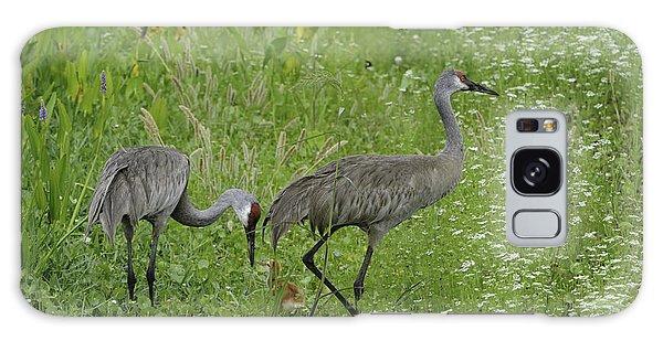 Sandhill Cranes And Chick Galaxy Case