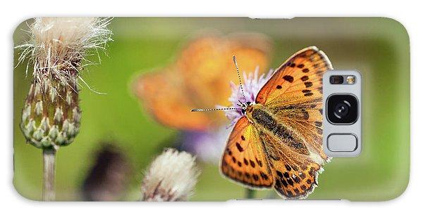 Scarce Copper Butterfly Galaxy Case