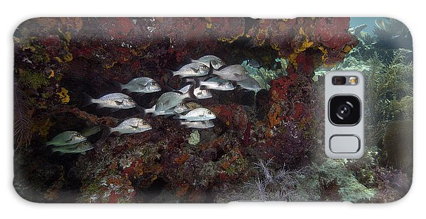 Mangrove Snapper Galaxy Case - School Of Gray Snapper Amongst by Terry Moore