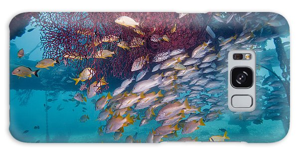 Mangrove Snapper Galaxy Case - Schools Of Gray Snapper, Yellowtail by Terry Moore