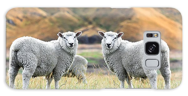 Sheep Galaxy S8 Case - Sheeps by MotHaiBaPhoto Prints