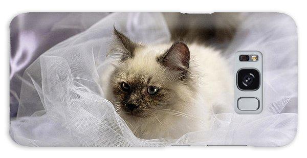Siberian Kitty On Lilac Galaxy Case