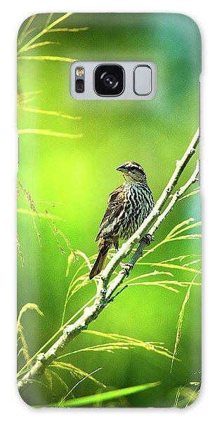 Singing Song Sparrow Galaxy Case