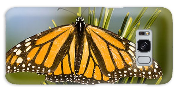 Single Monarch Butterfly Galaxy Case by Darcy Michaelchuk