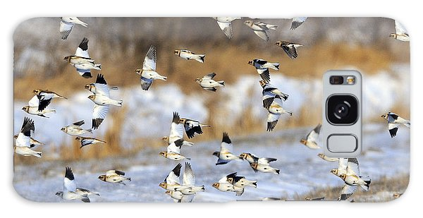 Snow Buntings Galaxy Case