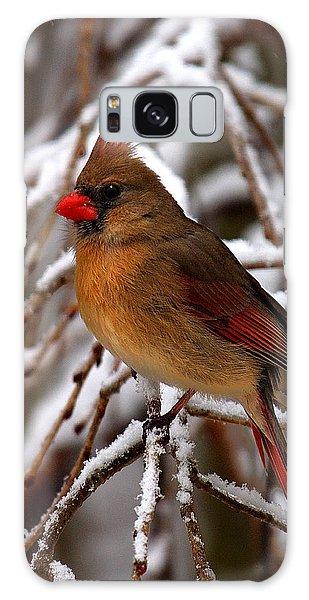 Snowbirds--cardinal Dsb025 Galaxy Case by Gerry Gantt