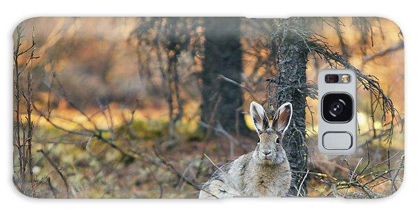Denali Galaxy Case - Snowshoe Hare by Rick Berk