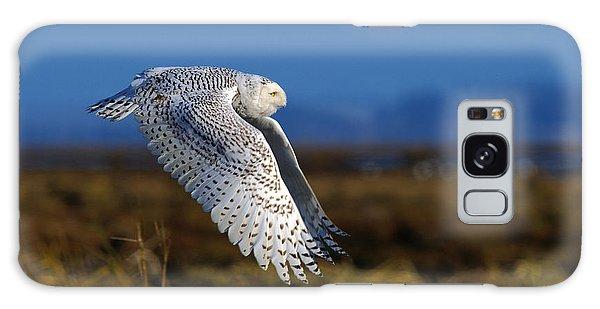 Snowy Owl 1b Galaxy Case by Sharon Talson