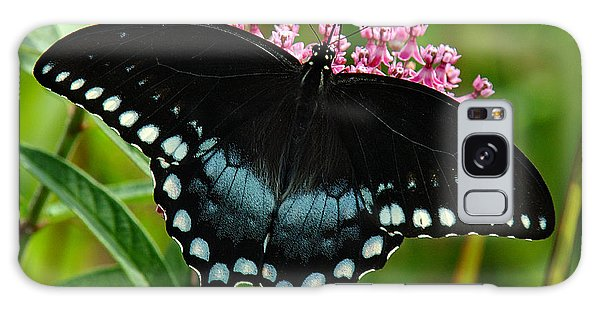 Spicebush Swallowtail Din038 Galaxy Case