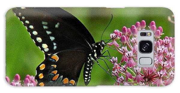 Spicebush Swallowtail Din039 Galaxy Case by Gerry Gantt