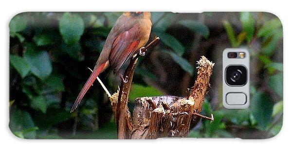 Spring Cardinal Galaxy Case