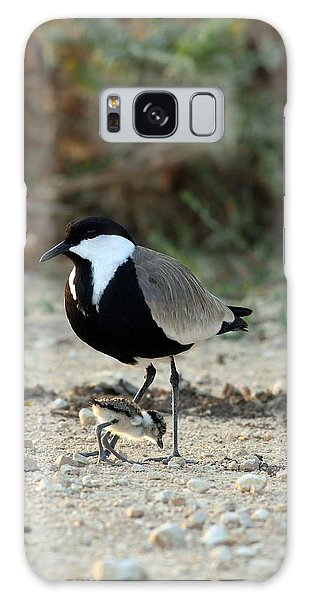 Spur-winged Plover And Chick Galaxy Case by Photostock-israel