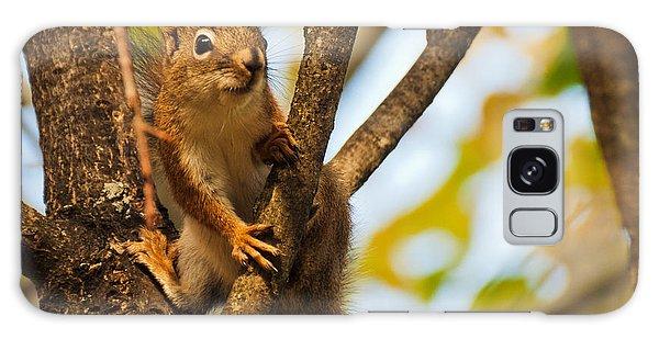 Squirrel On High Galaxy Case by Cheryl Baxter