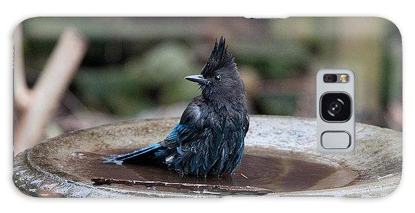 Steller Jay In The Birdbath Galaxy Case by Carol Ailles