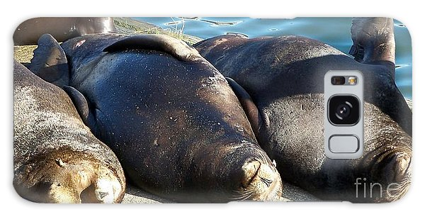 Sunbathing Sea Lions Galaxy Case by Chalet Roome-Rigdon
