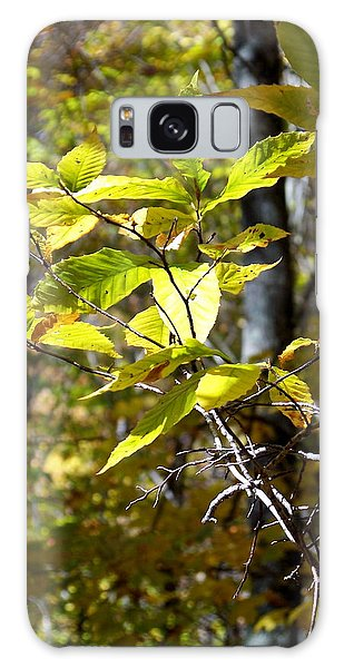 Sunlight On Leaves Galaxy Case by Robin Regan