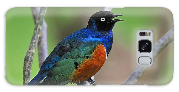 Superb Starling Galaxy Case