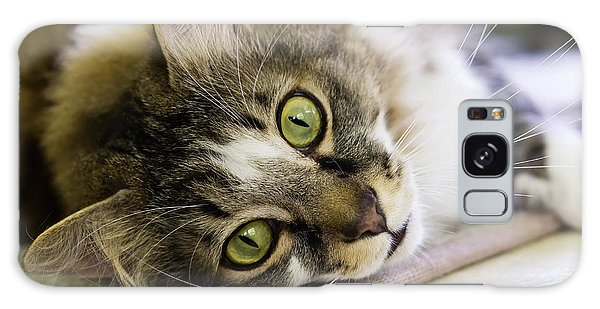 Tabby Cat Looking At Camera Galaxy Case