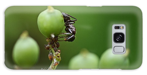 Ant Galaxy S8 Case - Tending The Herd by Susan Capuano