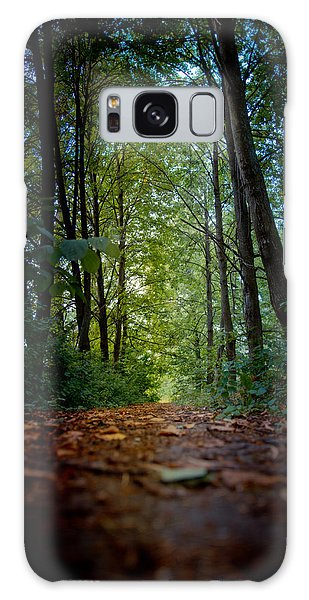 The Pathway In The Forest Galaxy Case