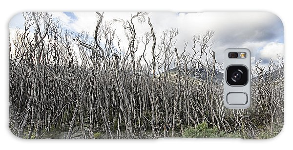 Wilsons Promontory Galaxy Case - Tree Cemetery by Douglas Barnard