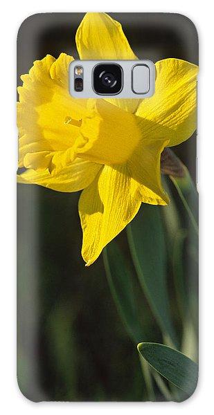 Trumpeting Daffodil Galaxy Case
