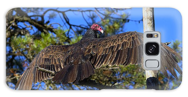 Turkey Vulture With Wings Spread Galaxy Case by Sharon Talson