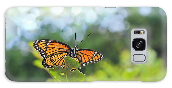 Viceroy Butterfly Limenitis Archippus  Galaxy Case by Marianne Campolongo