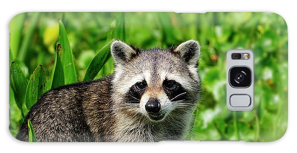 Wetlands Racoon Bandit Galaxy Case