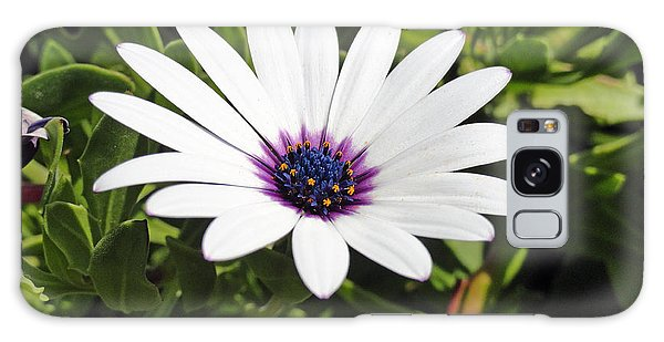White African Daisy Galaxy Case