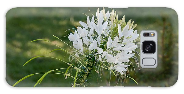 White Cleome Galaxy Case