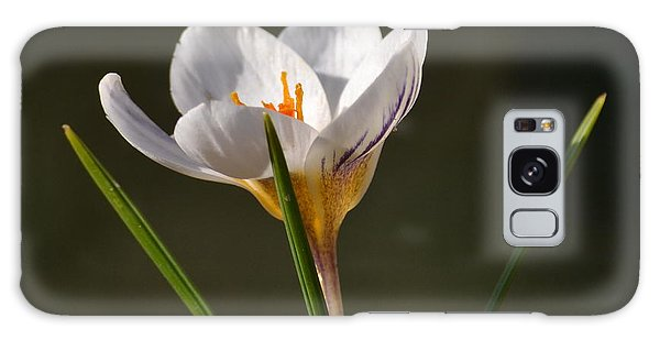 White Crocus Galaxy Case