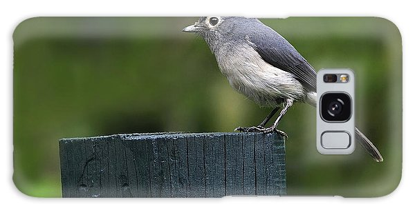 White-eyed Slaty Flycatcher Galaxy Case