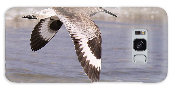 Willet In Flight Galaxy Case