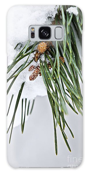 Pine Branch Galaxy Case - Winter Branches by Elena Elisseeva