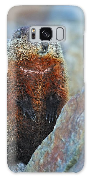 Woodchuck Galaxy Case