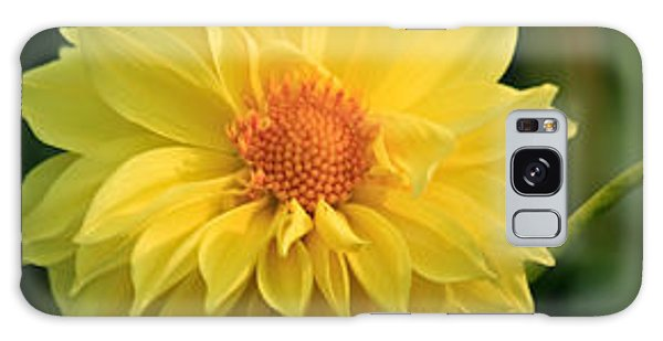 Yellow Dahlia Galaxy Case by Ann Murphy