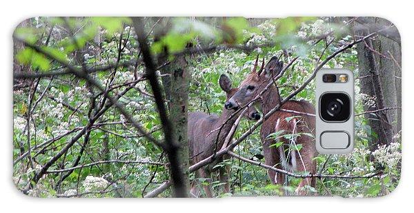 Young Deer In Flossmoor Forest Galaxy Case by Cedric Hampton