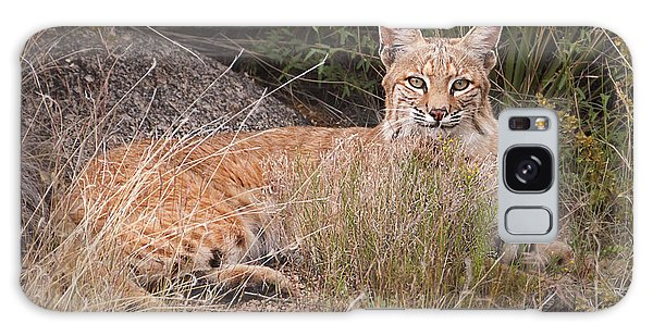 Bobcat At Rest Galaxy Case