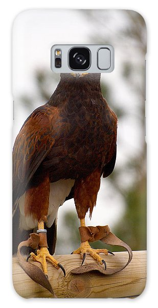 Harris's Hawk Galaxy Case