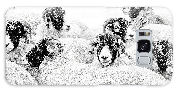 Sheep Galaxy Case -  In Winters Grip by Janet Burdon