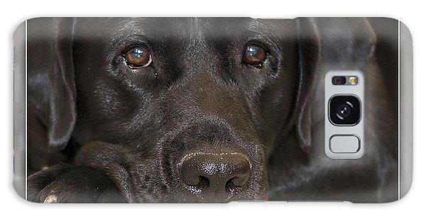 Labrador Retriever A1a Galaxy Case