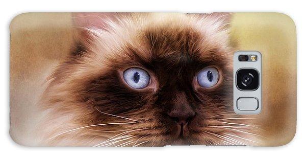Ragdoll Cat Galaxy Case