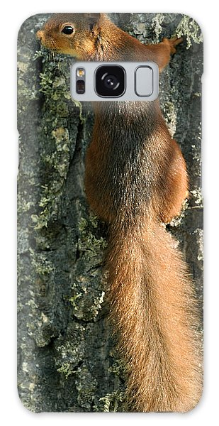 Red Squirrel  Galaxy Case
