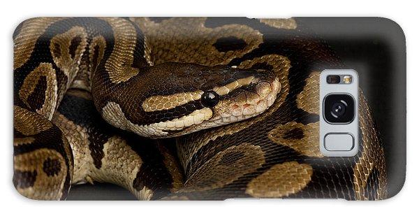 A Ball Python Python Regius Galaxy Case