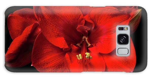Amaryllis 'merry Christmas Galaxy Case