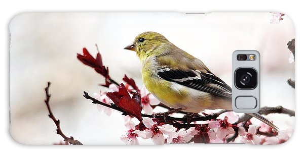 American Goldfinch In Spring Galaxy Case