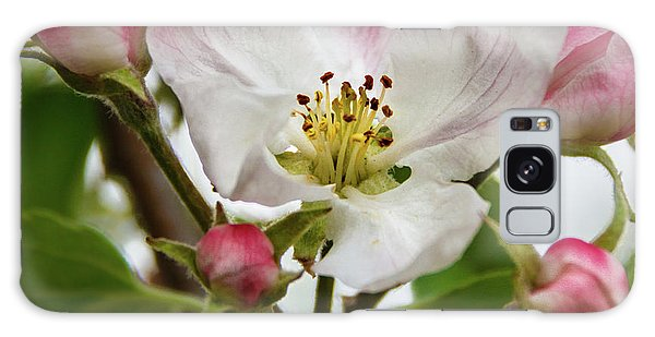 Apple Blossom Galaxy Case by Robert Bales